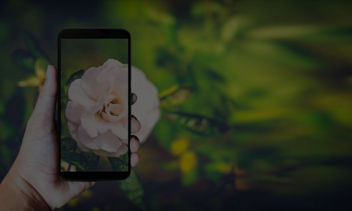 We Made It Possible to Identify Plants with a Snap and a Swipe
